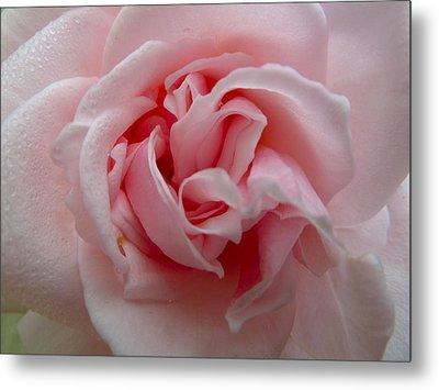 Pink Rose Metal Print by Debra Collins