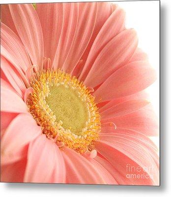 Pink Sherbert Blossom Metal Print