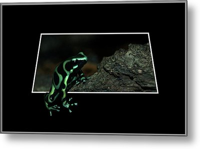 Poisonous Green Frog 02 Metal Print by Thomas Woolworth