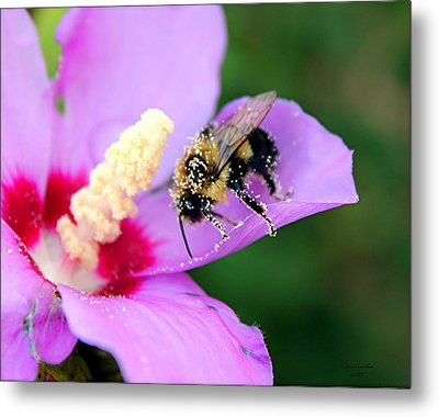 Metal Print featuring the photograph Pollen Sprinkles by Laurinda Bowling