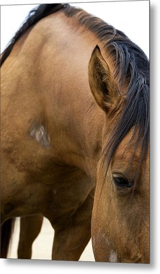 Metal Print featuring the photograph Curious Pony by Lorraine Devon Wilke