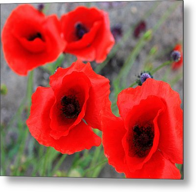 Poppies Of Stone Metal Print by Empty Wall