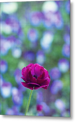 Popping Out Purple Metal Print