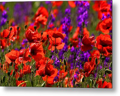 Poppy Field Metal Print by Emanuel Tanjala