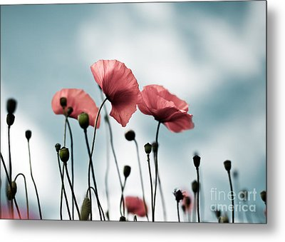 Poppy Flowers 07 Metal Print