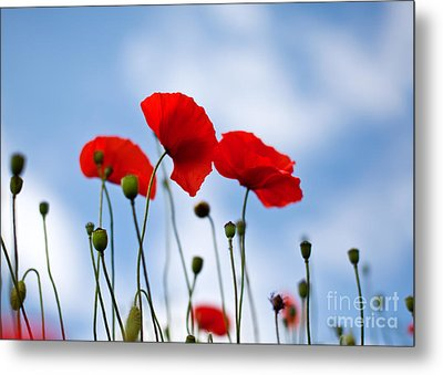 Poppy Flowers 08 Metal Print by Nailia Schwarz