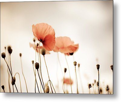 Poppy Flowers 14 Metal Print by Nailia Schwarz