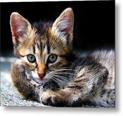 Posing Kitty Metal Print by Joe Myeress