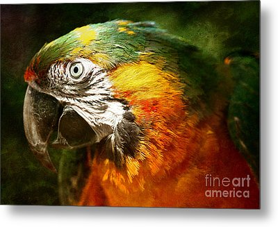 Pretty Polly Metal Print by Lee-Anne Rafferty-Evans