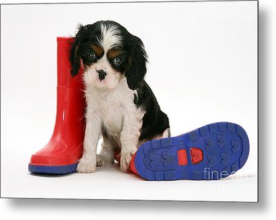 Puppies With A Childs Rain Boots Metal Print by Jane Burton