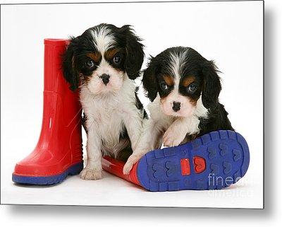 Puppies With Rain Boats Metal Print by Jane Burton