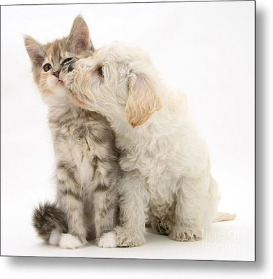 Puppy Nuzzles Kitten Metal Print by Jane Burton