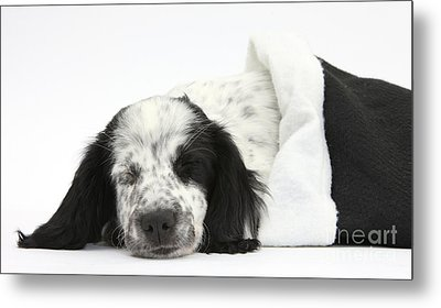 Puppy Sleeping In Christmas Hat Metal Print by Mark Taylor
