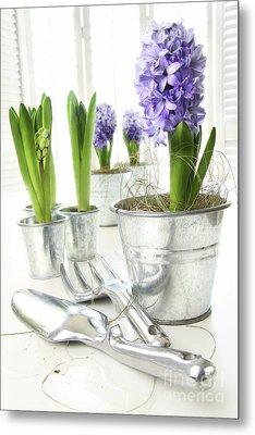 Purple Hyacinths On Table With Sun-filled Windows  Metal Print by Sandra Cunningham