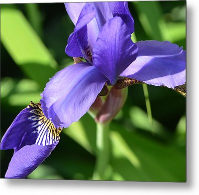Metal Print featuring the photograph Purple Passion by Tanya Tanski