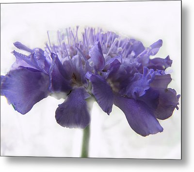 Metal Print featuring the photograph Purple Pincushin by Debbie Portwood