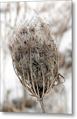 Metal Print featuring the mixed media Queen Anne's Lace Seed Pods by Bruce Ritchie