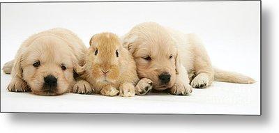 Rabbit And Puppies Metal Print by Jane Burton