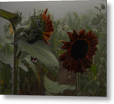Metal Print featuring the photograph Rain In The Sunflower Garden by Diannah Lynch