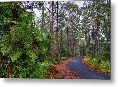 Rainforest - Port Macquarie - Australia Metal Print by Bryan Freeman