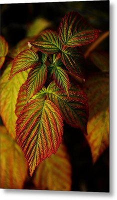 Raspberry Leaves Metal Print