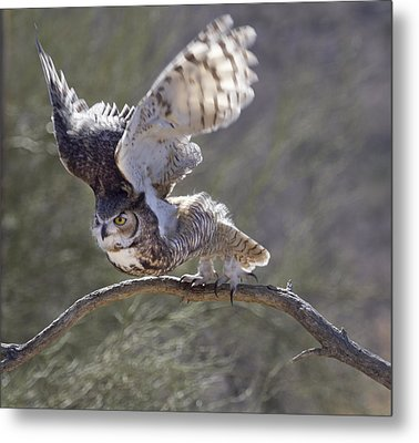 Ready To Fly Metal Print by Elvira Butler