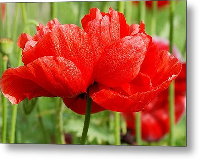 Metal Print featuring the photograph Red And Green by Fotosas Photography