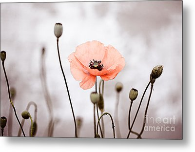 Red Corn Poppy Flowers 01 Metal Print