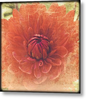 Metal Print featuring the photograph Red Dahlia by Alana Ranney