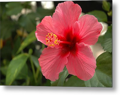 Red Hibiscus Metal Print by Jerry McElroy