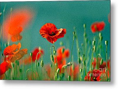 Red Poppy Flowers 06 Metal Print