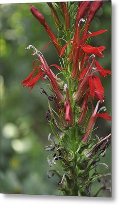 Red Red Flowers Metal Print by Brynn Ditsche