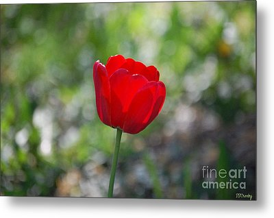 Only But A Single Tulip Metal Print