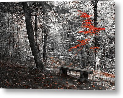 Reds In The Woods Metal Print by Aimelle