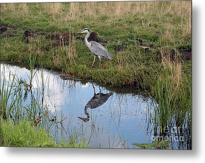 Reflection Metal Print by Vilas Malankar