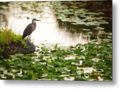 Metal Print featuring the photograph Resting My Wings by Anthony Rego