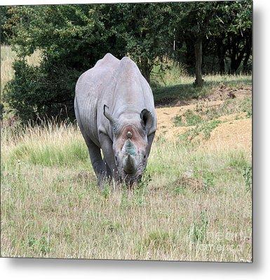 Rhinocerous 13 Metal Print by Ruth Hallam