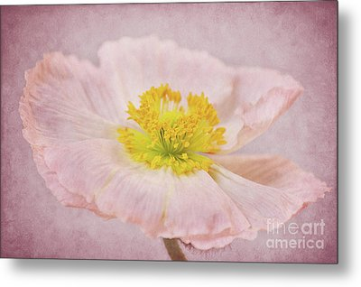 Romantico Metal Print by Angela Doelling AD DESIGN Photo and PhotoArt