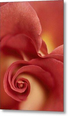 Rose Metal Print by Anne Gordon