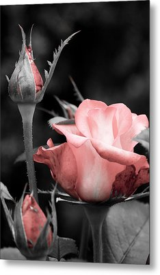 Metal Print featuring the photograph Roses In Pink And Gray by Michelle Joseph-Long
