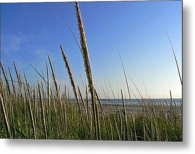 Sand Dune Grasses Metal Print by Pamela Patch