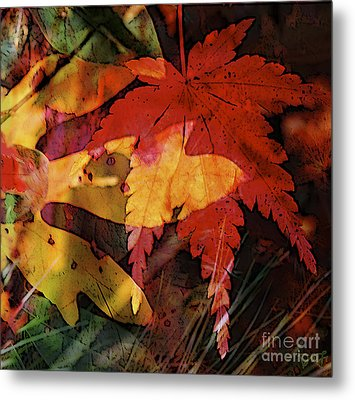 Sassy And Sugar Metal Print