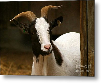 Metal Print featuring the photograph Say Cheese by Julie Clements