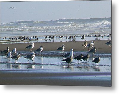 Sea Gulls And Breakers Metal Print