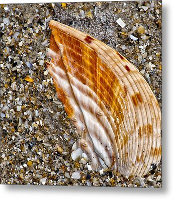 Sea Shell Metal Print by Nancie Rowan