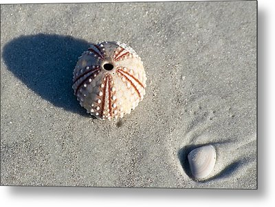 Sea Urchin And Shell Metal Print by Kenneth Albin