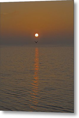 Seagull At First Light Metal Print by Gary Eason