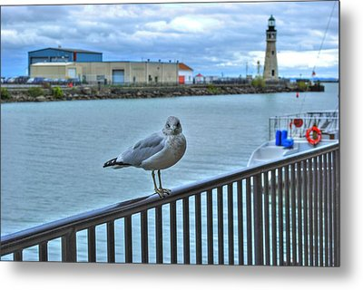 Metal Print featuring the photograph Seagull At Lighthouse by Michael Frank Jr