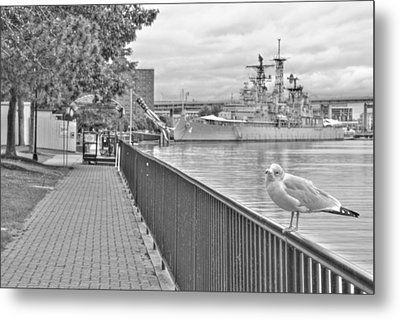 Metal Print featuring the photograph Seagull At The Naval And Military Park by Michael Frank Jr