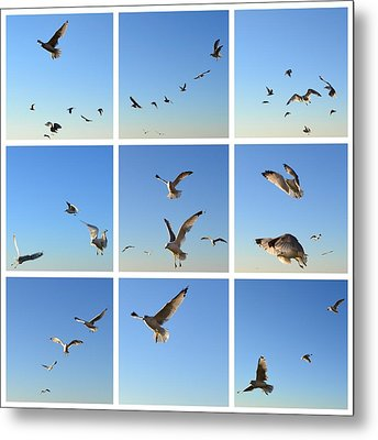 Seagull Collage 2 Metal Print by Michelle Calkins